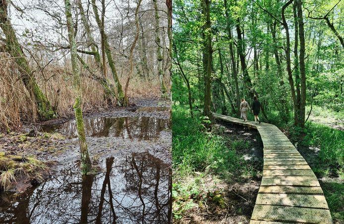 Links: januari 2021 - te nat voor een fijne wandeling. Rechts: juni 2021 - kronkelende knuppelpaden tussen de bomen