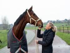 Paard in Harderwijk gewond na 'vervelende streek' met vuurwerk, eigenaar zoekt drie jonge daders