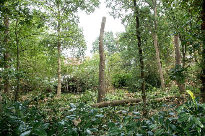 Bomenkap in Zonnehoeve.