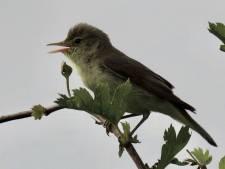 Vogelliefhebber stuit op iets bijzonders in het Waspikse Voedselbos