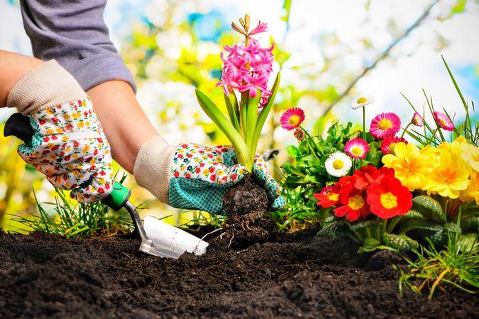 Tuinieren bloemen planten plant bloem in de tuin werken