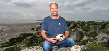 Leeggeslobberde oesters uit restaurants moeten babyoesters op de Maasvlakte aantrekken