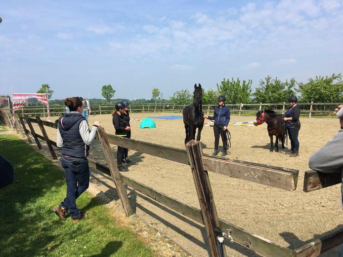In de grote paardenbak in de polder van Ouwerkerk worden demonstraties gegeven op het gebied van paardengedrag