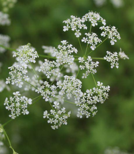 'Laat kinderen iets leuks doen in de tuin, niet alleen naar planten kijken'