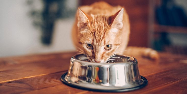 kat-eet-voerbakje-niet-leeg.jpg