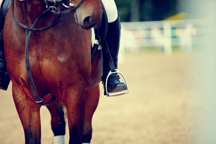 stockadr stockpzc paard paardrijden dressuur springen paardensport