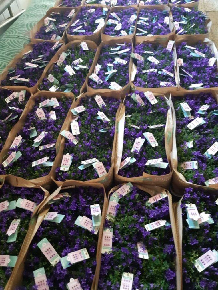 De bloemen komen van bij Eurotuin Deinze.
