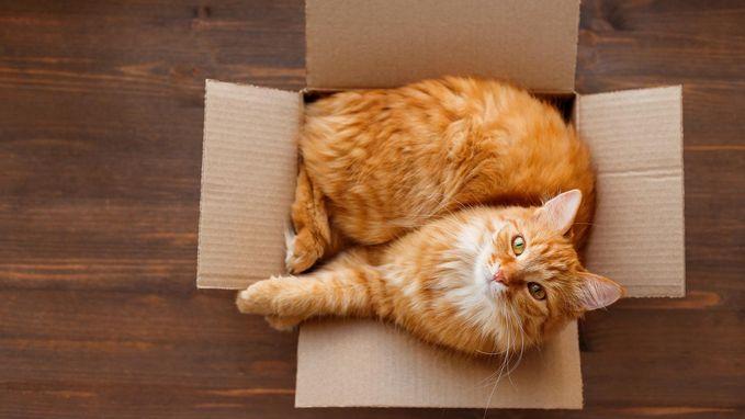 Waarom katten altijd in zo'n krappe doos gaan zitten