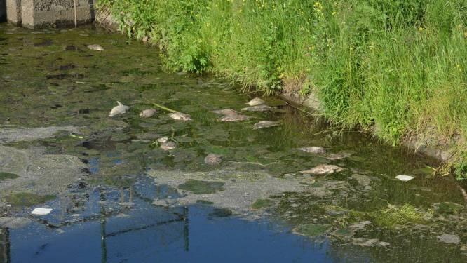Massale vissterfte in Handzamevaart: al 150 kilo kadavers uit water verwijderd
