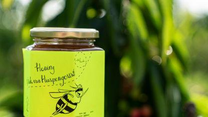120.000 bijen zoemen boven cultuurcentrum Sint-Truiden
