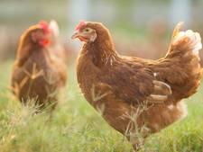 Frisse Start quizmaster: hoeveel ruimte heeft een biologische kip die binnen zit?