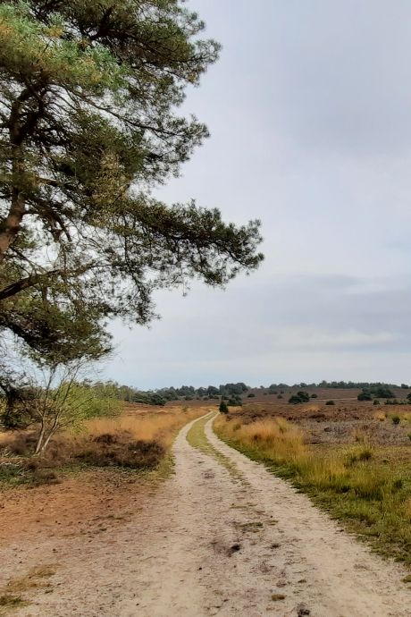 Fietsen met Truus: trappen met klein verzet over de Sallandse Heuvelrug