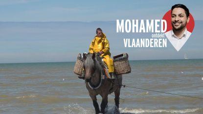 """""""Waarom geen Brabants trekpaard op onze Vlaamse vlag?"""": Mohamed ontdekt Vlaanderen"""
