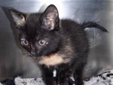 Kittens gedumpt in Blauwbos: één aangereden, ander na zoektocht levend gevonden