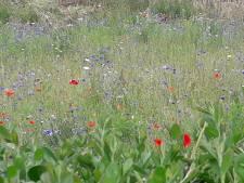 De Bilt maakt zich sterk voor behoud planten- en diersoorten