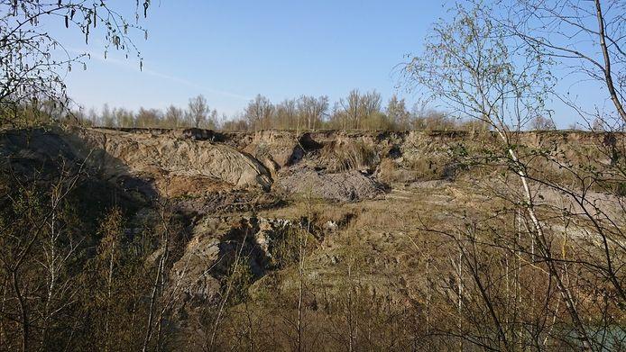 De oeverzwaluwen broeden in de steile wanden van de oude kleiput.