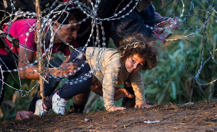 Vluchtelingen steken de grens tussen Servië en Hongarije over, archiefbeeld van augustus 2015. Beeld AP
