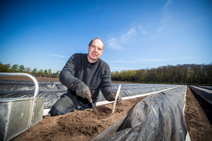 Aspergekweker Johan Buijs. (Foto Jeroen Jumelet)