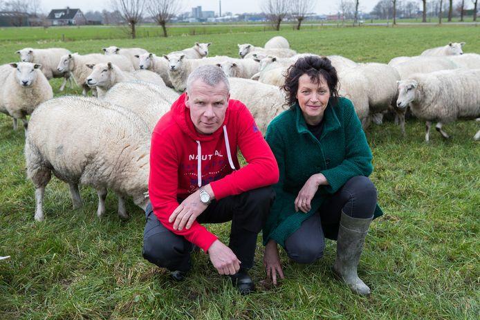 Coen Bosch en Jolanda Kieftenbeld van het Team Agro NL, tussen de schapen.
