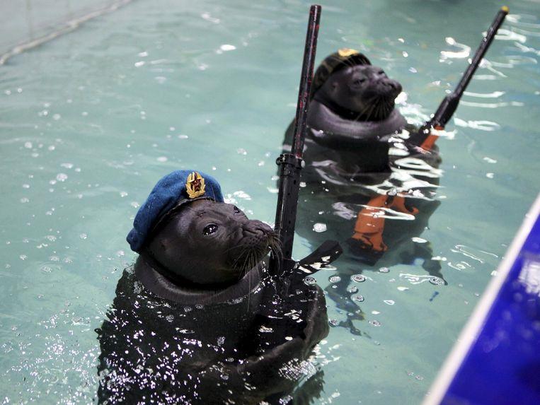 In een waterpark in de stad Irkoetsk werden zelfs zeehonden ingezet om de overwinning op nazi-Duitsland te vieren. Beeld © REUTERS