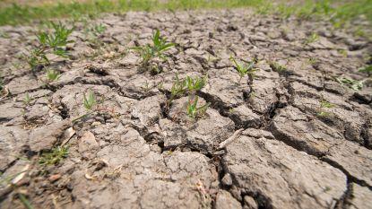 """""""Met noodmaatregelen komen we er niet meer in deze droogte, het roer moet volledig om"""""""