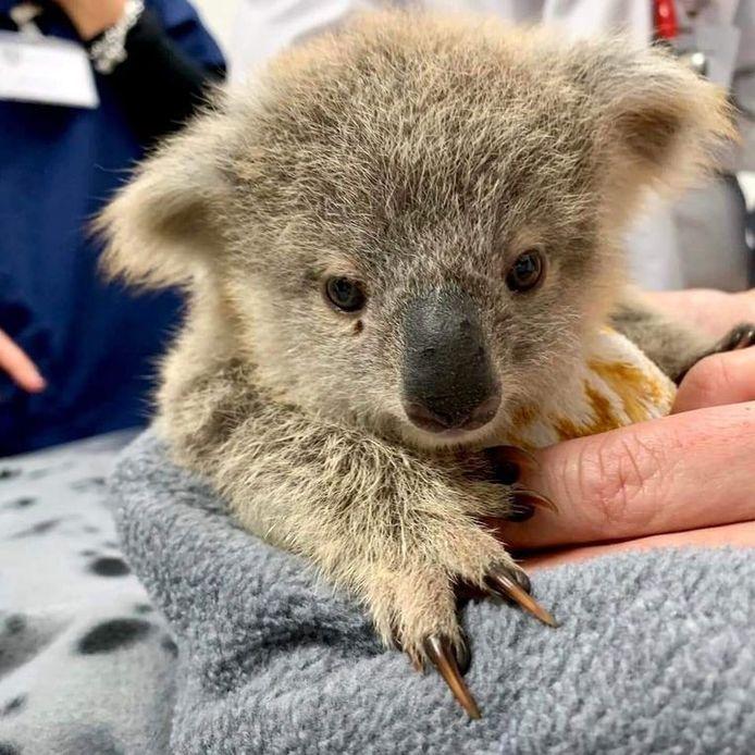 Les pochons servent notamment à maintenir au chaud les bébés animaux orphelins.