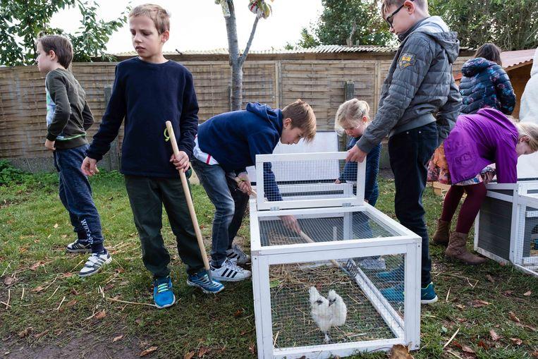 Het hok van de kuikens schoonmaken
