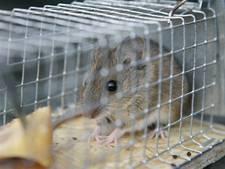 Kiezebrink in Putten wil zelf muizen  fokken voor diervoeders