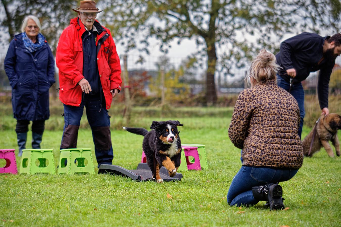 De coronaregels voor hondenscholen verschillen nu per gemeente. De Partij voor de Dieren in Apeldoorn heeft nu een verzoek bij de Veiligheidsregio Noord- en Oost-Gelderland (VNOG) neergelegd om daar een einde aan te maken.