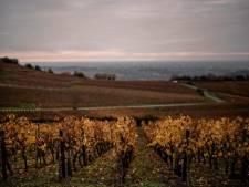 """La production française de vin en 2021 devrait atteindre un niveau """"historiquement bas"""""""