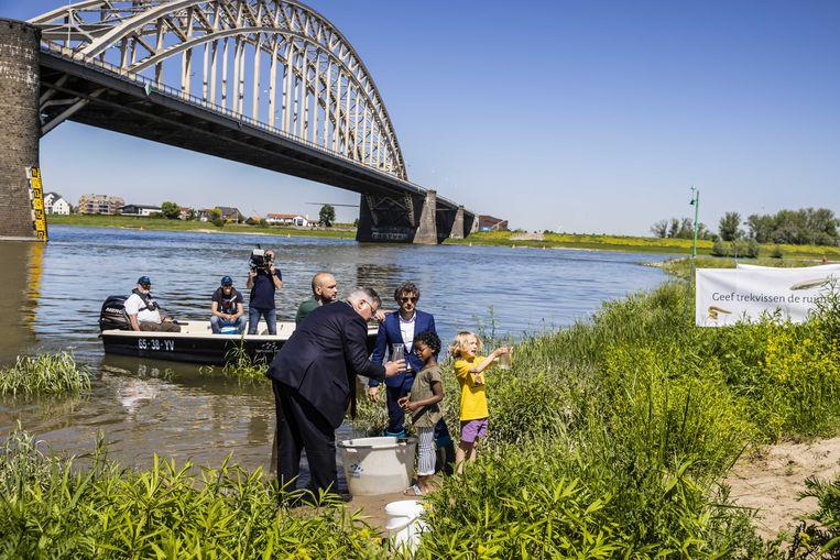 In aanwezigheid van burgemeester van Nijmegen Hubert Bruls laten Duitse en Nederlandse natuur-, water- en sportvisserijorganisaties tachtigduizend kleine elften los in de Waal bij Nijmegen. Beeld ANP