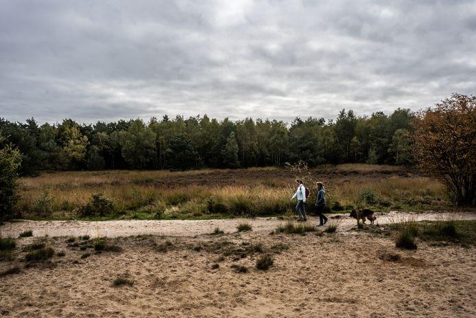 Het bos bij het Rozendaalse Veld heeft het moeilijk.