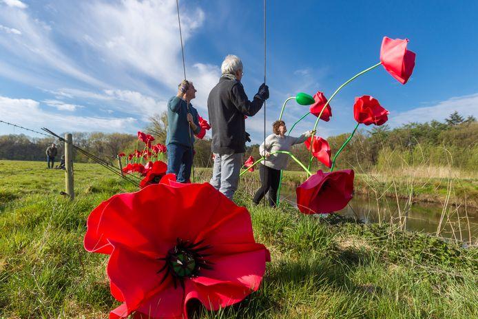 Op een weiland in Breugel worden 100 klaprozen van 2 tot 3,5 meter hoog geplaatst.