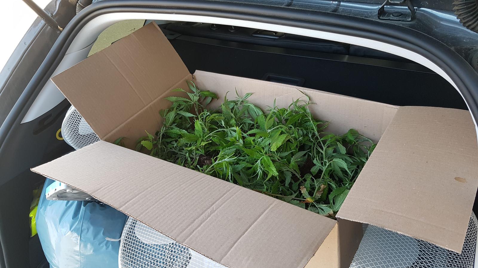 De recherche bracht woensdag heel wat jonge cannabisplantjes en tal van kwekersmateriaal naar buiten uit een oude loods in Veurne. Wat u ziet op de foto, is slechts een fractie.