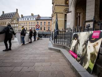 """Zaakvoerder slachthuis Verbist vrijgesproken voor dierenmishandeling: """"Beelden spreken voor zich, maar werden gemaakt zonder toestemming"""""""