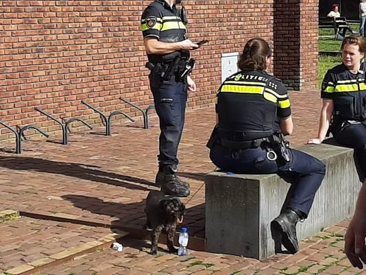 Één van de hondjes die gered werd uit het appartementencomplex aan de Karel Doormanstraat