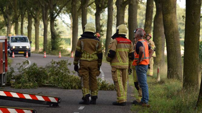 Tijdelijk geen verkeer Westermaatweg tussen Almelo en Vriezenveen door boom