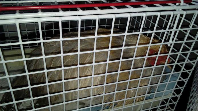 De kippen werden gedumpt in een bos in Vorden.
