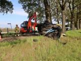 Bestuurder (39) overleden na aanrijding tegen boom in Wintelre