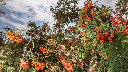 Grootste hitteslachtoffers: jonge bomen