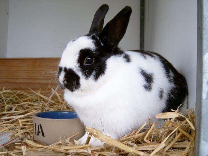 Een konijn.