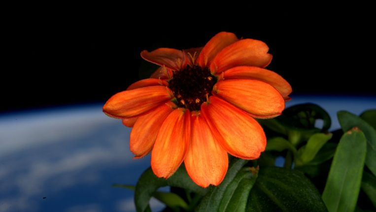 De bloem van Kelly. Beeld AFP