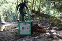 Strada, een 19-jarige orang-oetan, bij vrijlating in het Bukit Batikap Protection Forest.