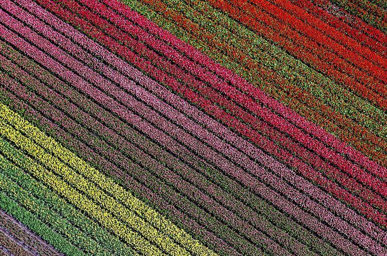 'Ik ga ontzettend veel tulpen en narcissen kopen. Zo help ik de boeren.' Beeld EPA