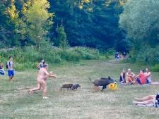 Scène insolite en Allemagne: un homme nu poursuit un sanglier qui s'enfuit avec son ordinateur portable