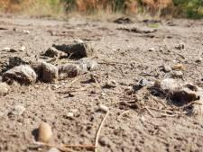 Wolvin op Noord-Veluwe heeft partner: 'het begin van een roedel'