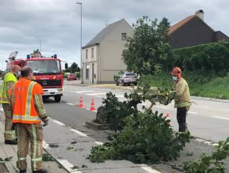 Beperkte stormschade: bomen en takken op straat, antenne losgekomen op dak