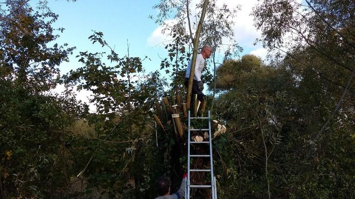Wilgen knotten op natuurwerkdag in Schuddenbeurs