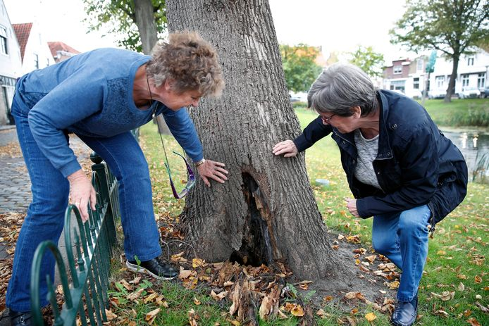 Jenneke Warning (L) en haar buurvrouw mevr.Kabbedijk bij de boom voor hun huis waar een enorm gat in zit aan de onderkant van de boom.