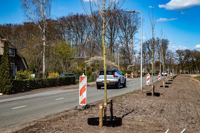 Op de Boxbergerweg in Diepenveen zijn de grote bomen vorig jaar gekapt en begin dit jaar vervangen voor jonge bomen.